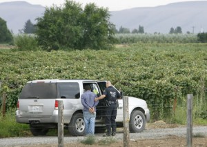 Mexican authorities find massive marijuana plantation